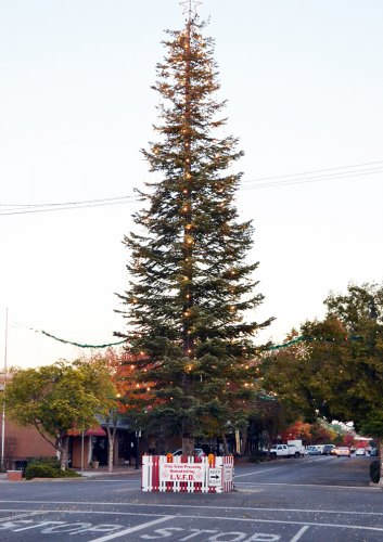 The traditional Lemoore Christmas Tree, courtesy of the Lemoore Volunteer Fire Department, stands proudly in downtown Lemoore.