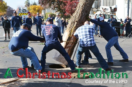 Lemoore firemen muscle their 69-foot Christmas tree into its manhole at the D Street and Fox Street intersection Sunday afteroon as the Lemoore holiday season officially begins.