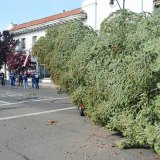 The Lemoore Christmas Tree, moments after arriving in Lemoore Sunday morning.