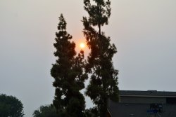 California's fires, while miles away, have had a smoky effect on Lemoore and the San Joaquin Valley. Here the sun, blanketed by smoke rests between two trees on Bush Street at about 6 p.m. Thursday evening.