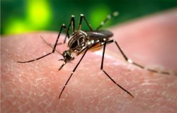 Mosquito Abatement District issues public health advisory warning regarding mosquito