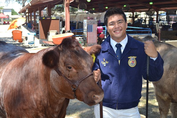 Lemoore FFA members are very active, including participating in the Kings County Fair every year. Here, Kyle Jue shows off a cow he raised.